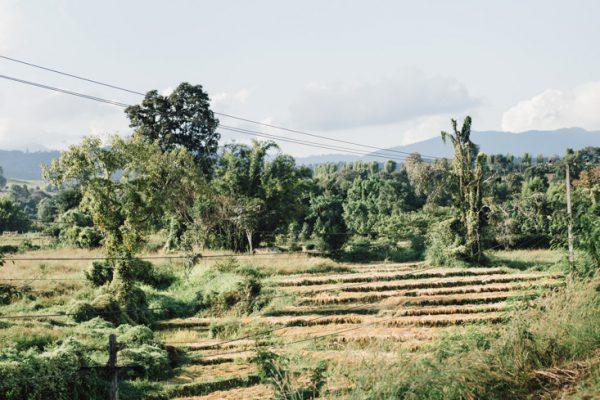 Thailand - Alexandra Wallace
